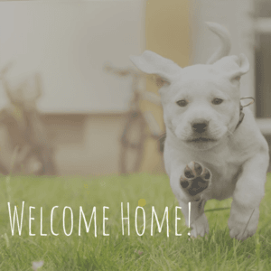 Welcome Home to your Charlottesville Apartment